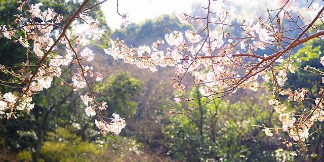 Spring's Returning Light